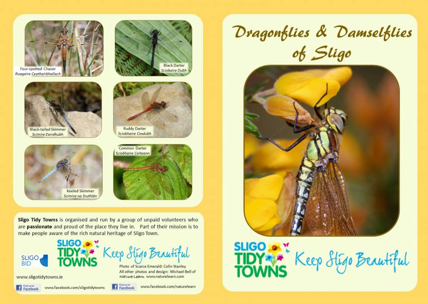 Sligo Dragonfly Survey